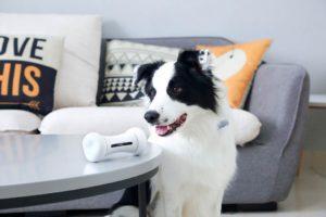 Роботы интерактивные игрушки для собак