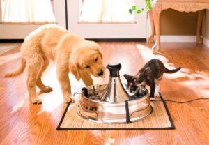 Автопоилка для кошек и собак