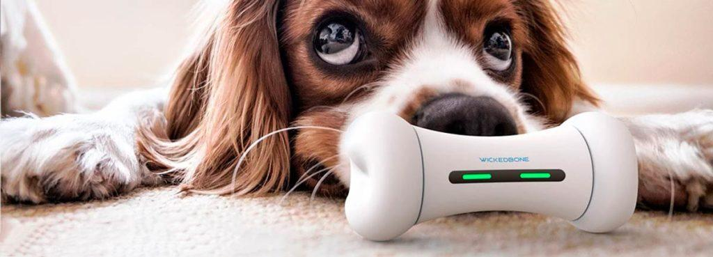 Робот-игрушка для собаки