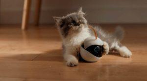 робот игрушка для котенка