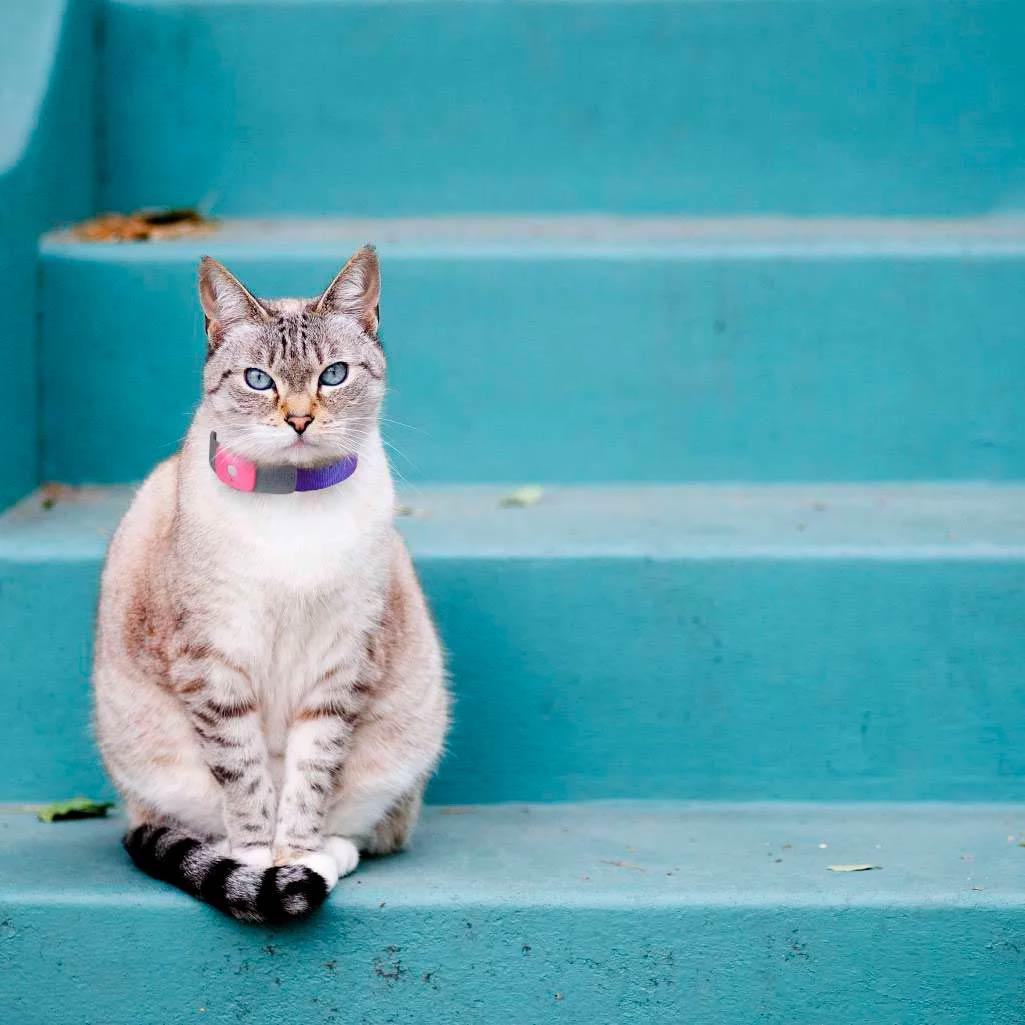 Кошка с gps трекером