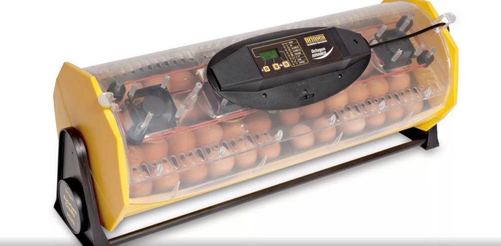 Умный инкубатор для яиц